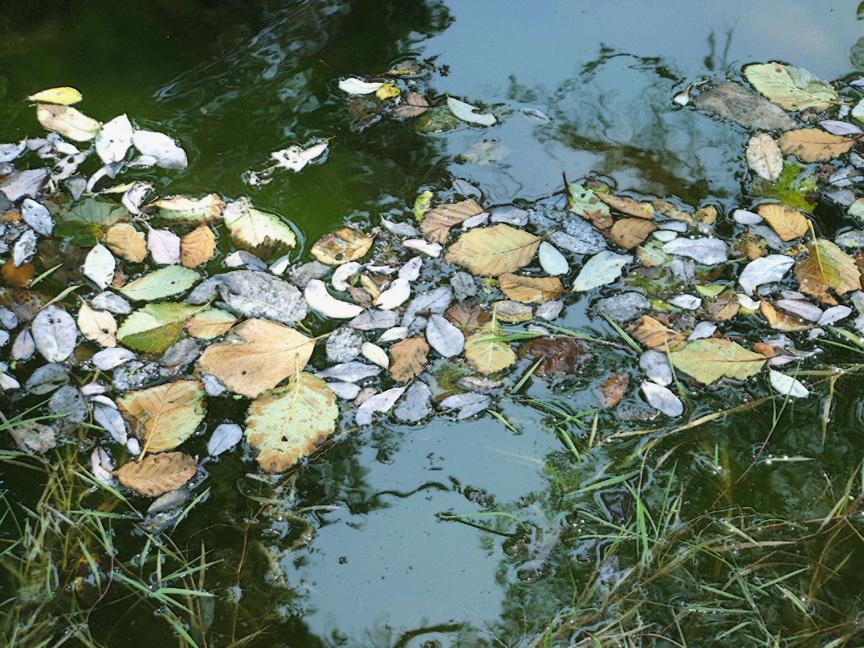 Creek Mosaics