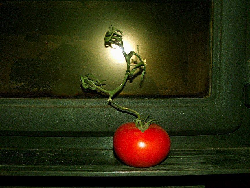 Tomato_1_copy