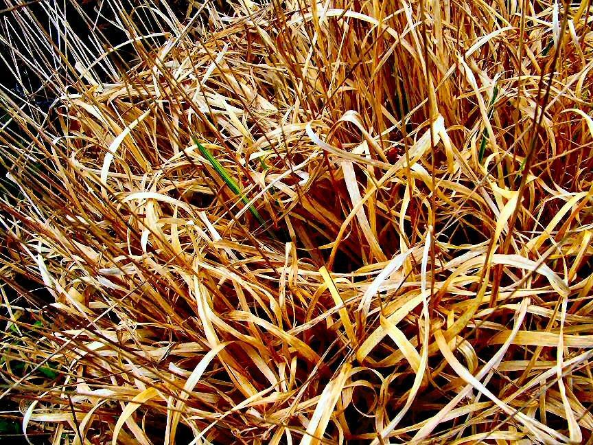 Spring_moor_grass